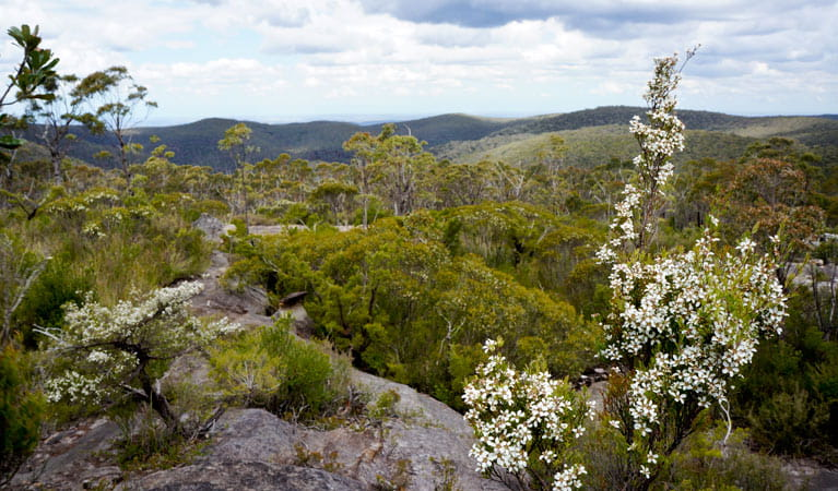 Valley views and wildflowers, Wentworth Falls to Woodford trail, Blue Mountains National Park. Photo: Stephen Alton/OEH