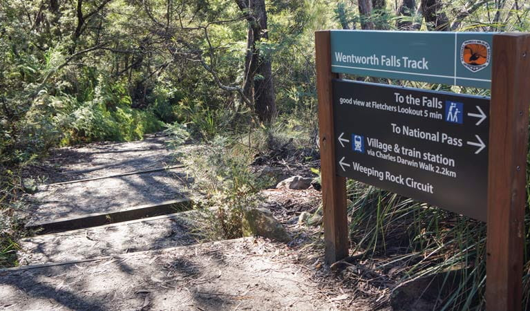 Wentworth Falls track, Blue Mountains National Park. Photo: Steve Alton/OEH.