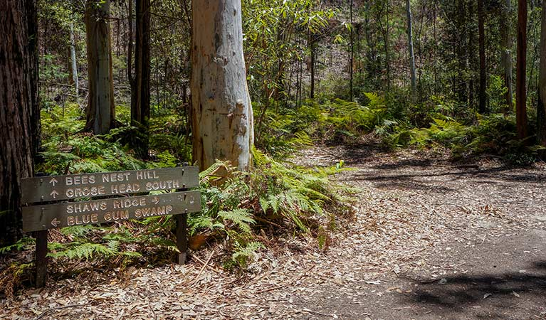 Timber sign on Blue Gum Swamp loop walk, Blue Mountains National Park. Photo: Steve Alton/OEH