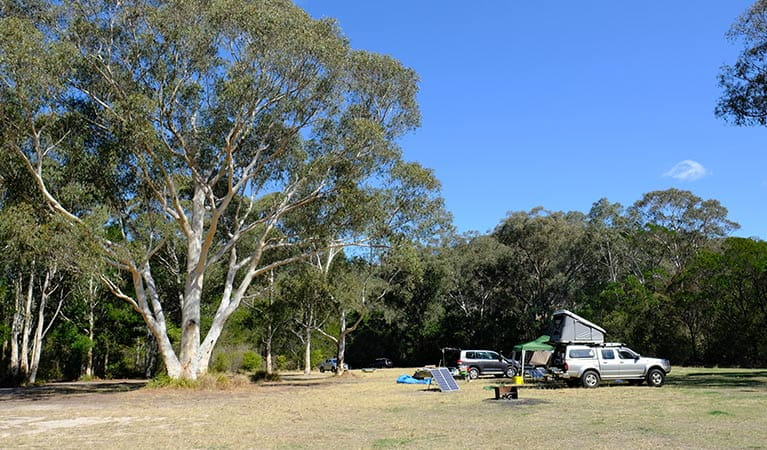 Burralow Creek campground, Blue Mountains National Park. Photo: E Sheargold/OEH