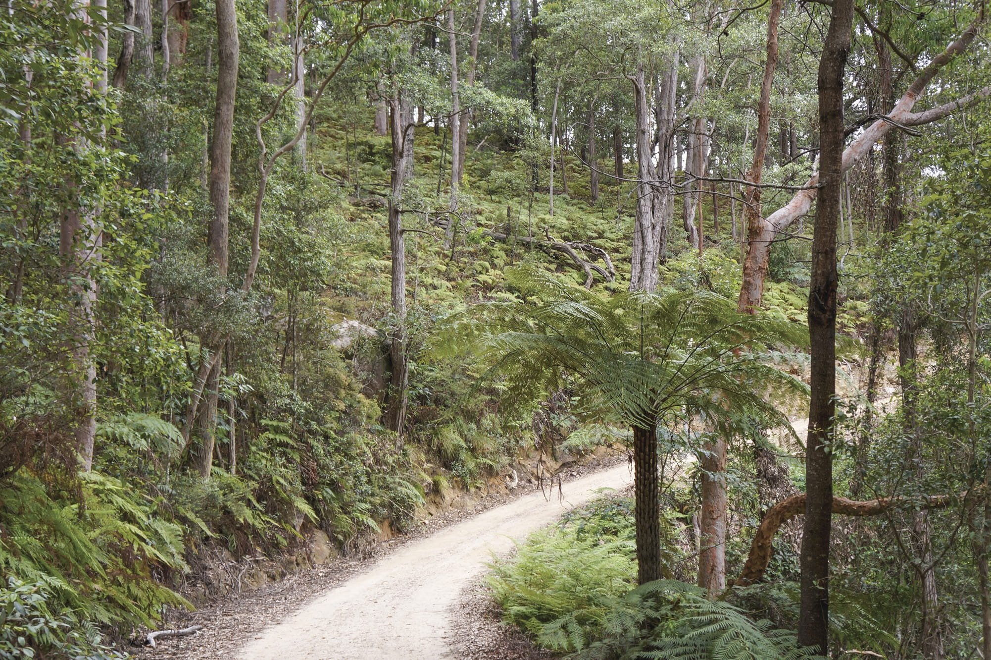 The road to Burralow Creek Campground, Blue Mountains National Park. Photo: Steve Alton/OEH