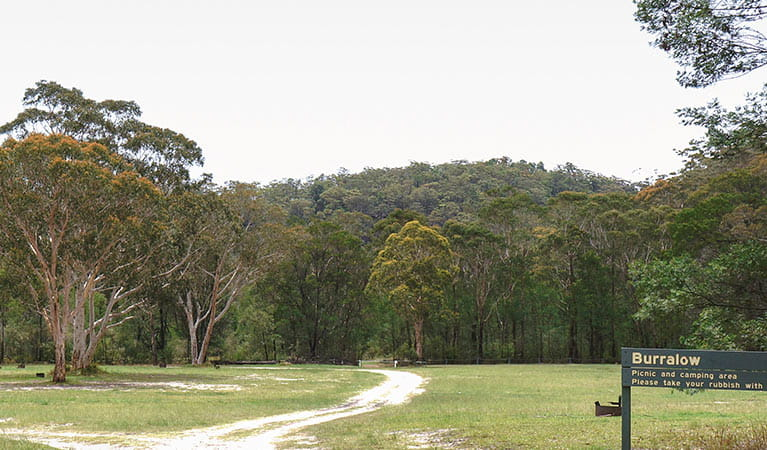 Burralow Creek campground, Blue Mountains National Park. Photo: Steve Alton/OEH