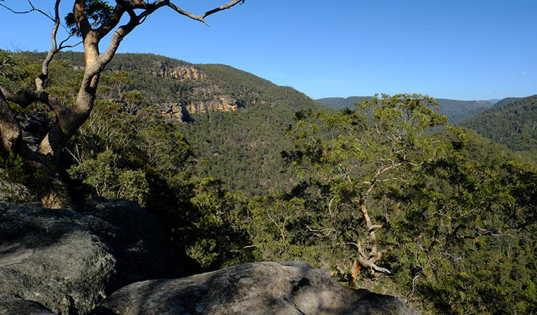 Views of lower Grose Valley gorge from Vale of Avoca lookout, Blue Mountains National Park. Photo: Elinor Sheargold/OEH