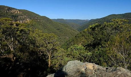 Lower Grose Valley views, Vale of Avoca lookout, Blue Mountains National Park. Photo: Elinor Sheargold/OEH
