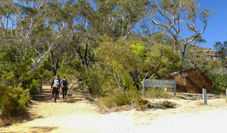 Walkers on Mount Banks Road trail, Blue Mountains National Park. Photo: E Sheargold/OEH