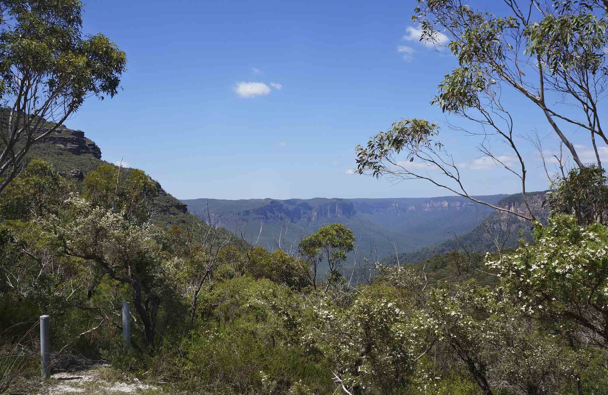 View of Grose Valley from Mount Banks carpark, Blue Mountains National Park. Photo: Steve Alton/OEH
