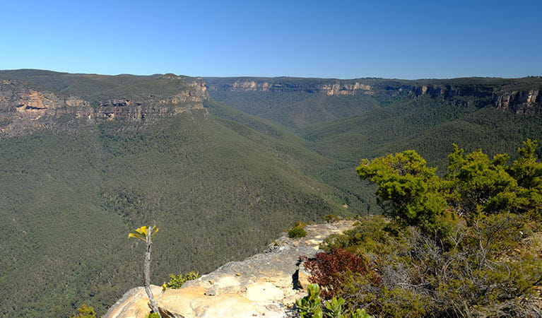 Grose Valley seen from Mount Banks Road trail, Blue Mountains National Park. Photo: E Sheargold/OEH
