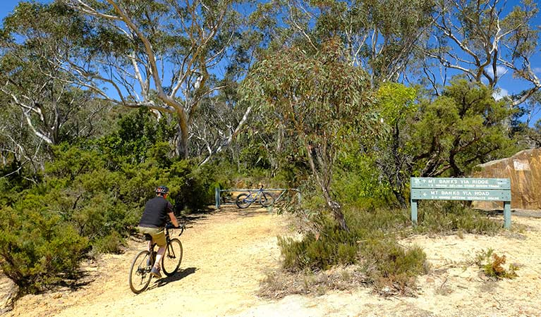 A bike rider on Mount Banks Road trail, Blue Mountains National Park. Photo: E Sheargold/OEH.