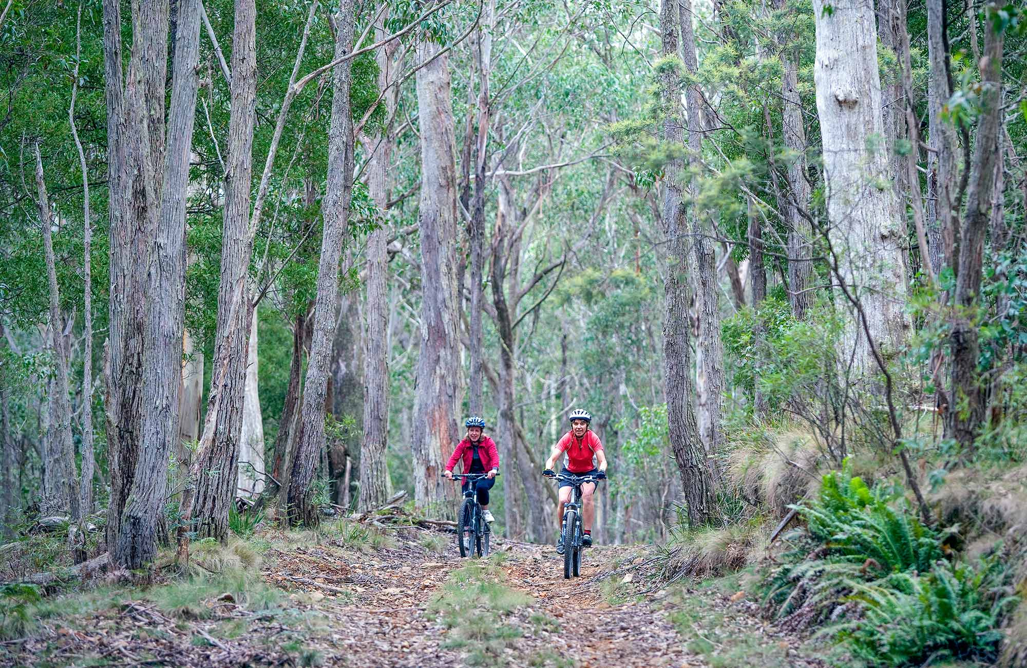 Two mountain bike riders on a trail in the Southern Blue Mountains. Photo: Nick Cubbin/OEH