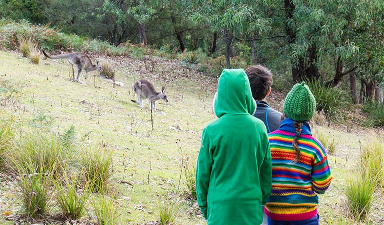Children look at kangaroos at Dunphys campground, Blue Mountains National Park. Photo: Simone Cottrell/OEH.