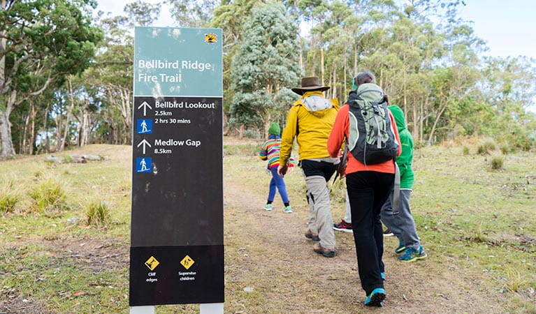 A family walk along Bellbird Ridge fire trail, Blue Mountains National Park. Photo: Simone Cottrell/OEH