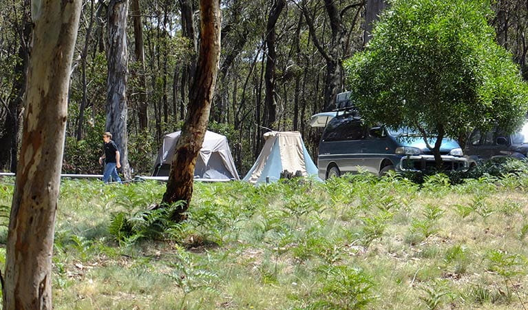 Mount Werong campground, Blue Mountains National Park. Photo: J Bros OEH