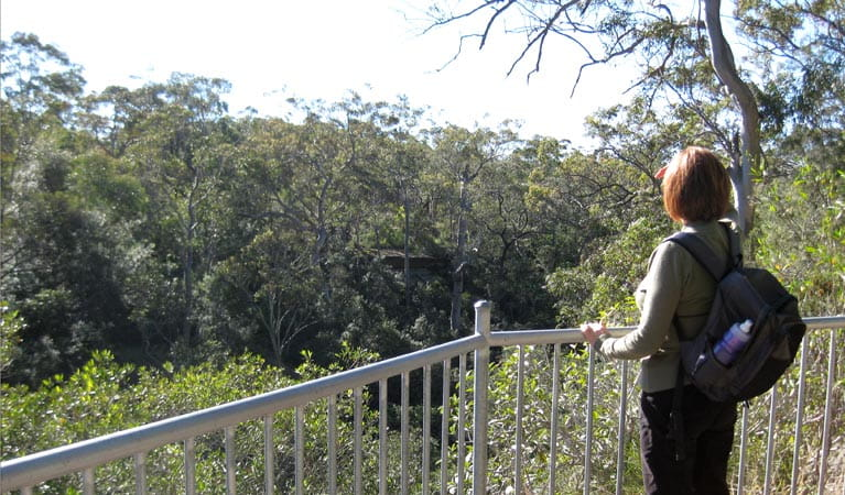Falcon Crescent lookout, Bomaderry Creek Regional Park