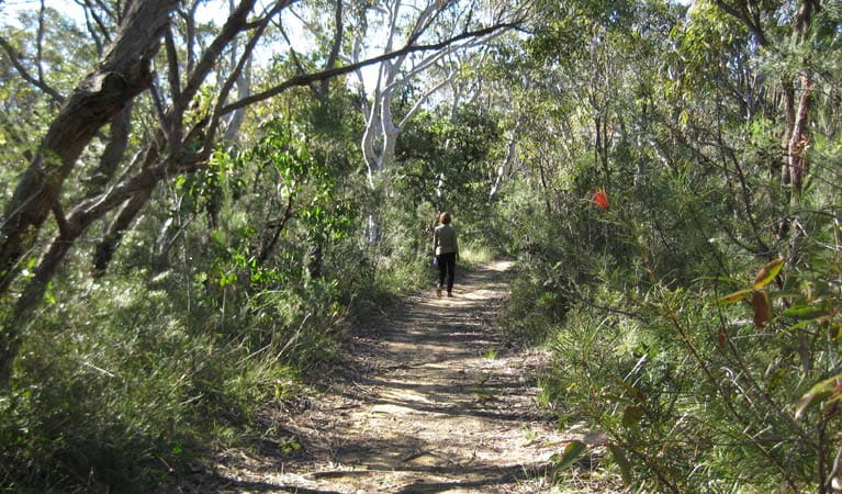Falcon Crescent trail, Bombaderry Creek Regional Park