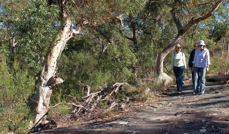 Sunny walking track, Bomaderry Creek Regional Park