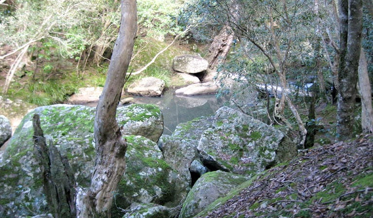 She Oak rocks, Bomaderry Creek Regional Park
