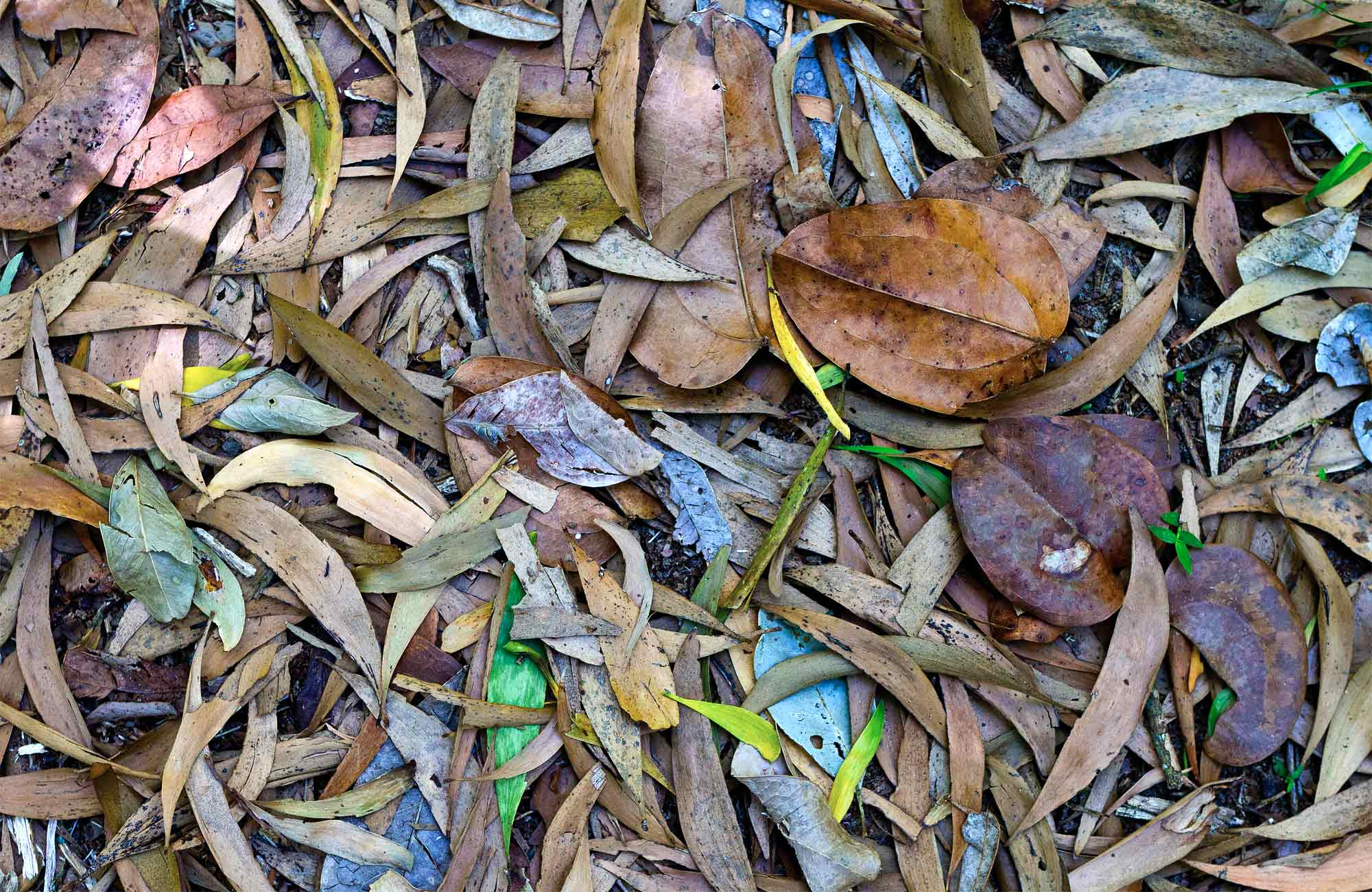 Leaves on the ground. Photo: Rob Cleary