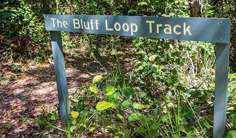 Bluff loop walking track, Bongil Bongil National Park. Photo: Rob Cleary