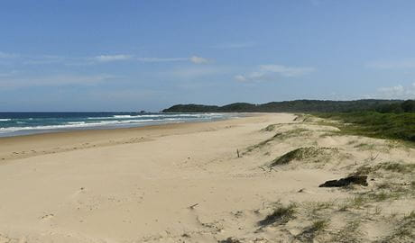 Bongil Beach, Bongil Bongil National Park. Photo: Barbara Webster