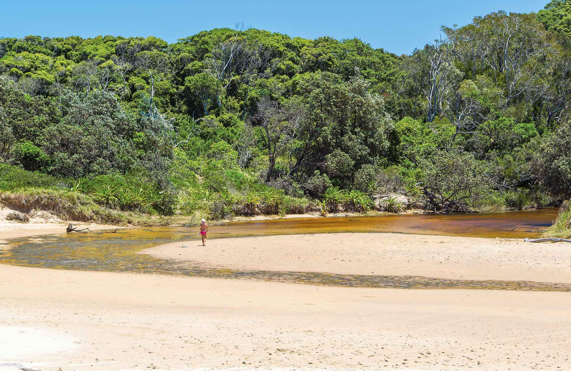 Bonville Creek, Bongil Bongil National Park. Photo: Rob Cleary