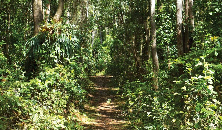 A walking track in the rainforest. Photo: Rob Cleary