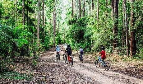 A group of 5 mountain bikers ride through lush forest on one of the Muurlay Baamgala cycle trails. Photo: Jay Black/DPIE