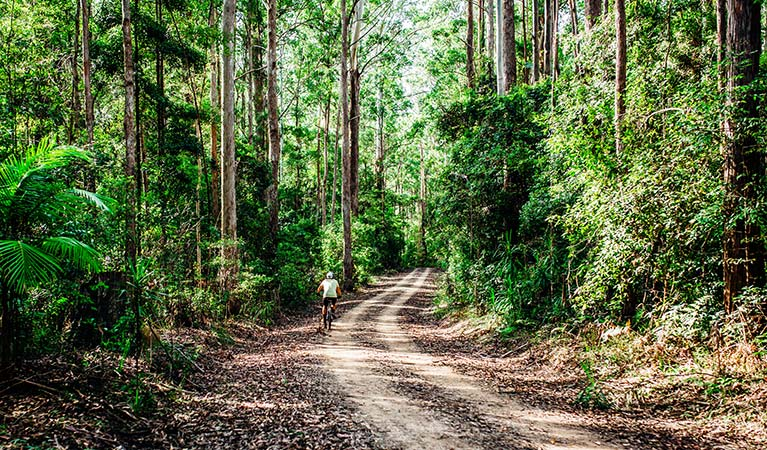 A man rides on a dirt trail through dense, green forest in Bongil Bongil National Park. Photo: Jay Black/DPIE