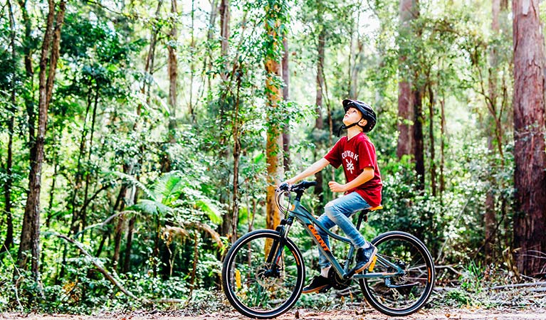 A boy gazes up at forest canopy while riding his bike along one of the Muulay Baamgala cycle trails. Photo: Jay Black/DPIE