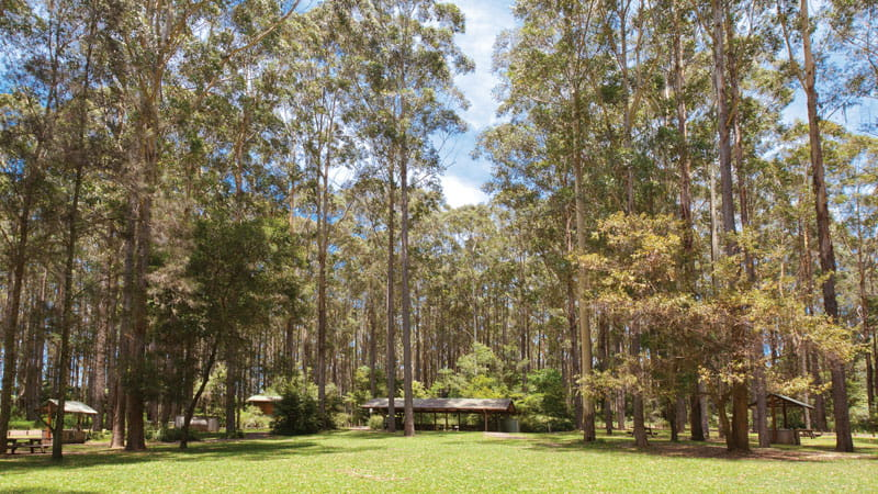 Picnic area, Bongil Bongil National Park. Photo: Rob Cleary