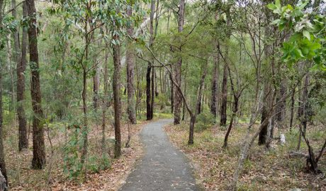 A formed track through trees along Boonoo Boonoo Falls walking track in Boonoo Boonoo National Park. Photo: Leah Pippos © DPIE