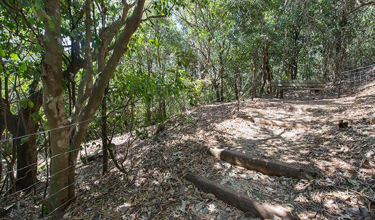 Sun-dappled forest track on Cape Hawke lookout walk, Booti Booti National Park. Photo credit: John Spencer © DPIE
