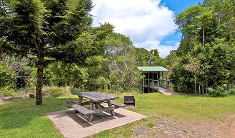 Picnic table at Antarctic Beech picnic area, Border Ranges National Park. Photo credit: John Spencer &DPIE
