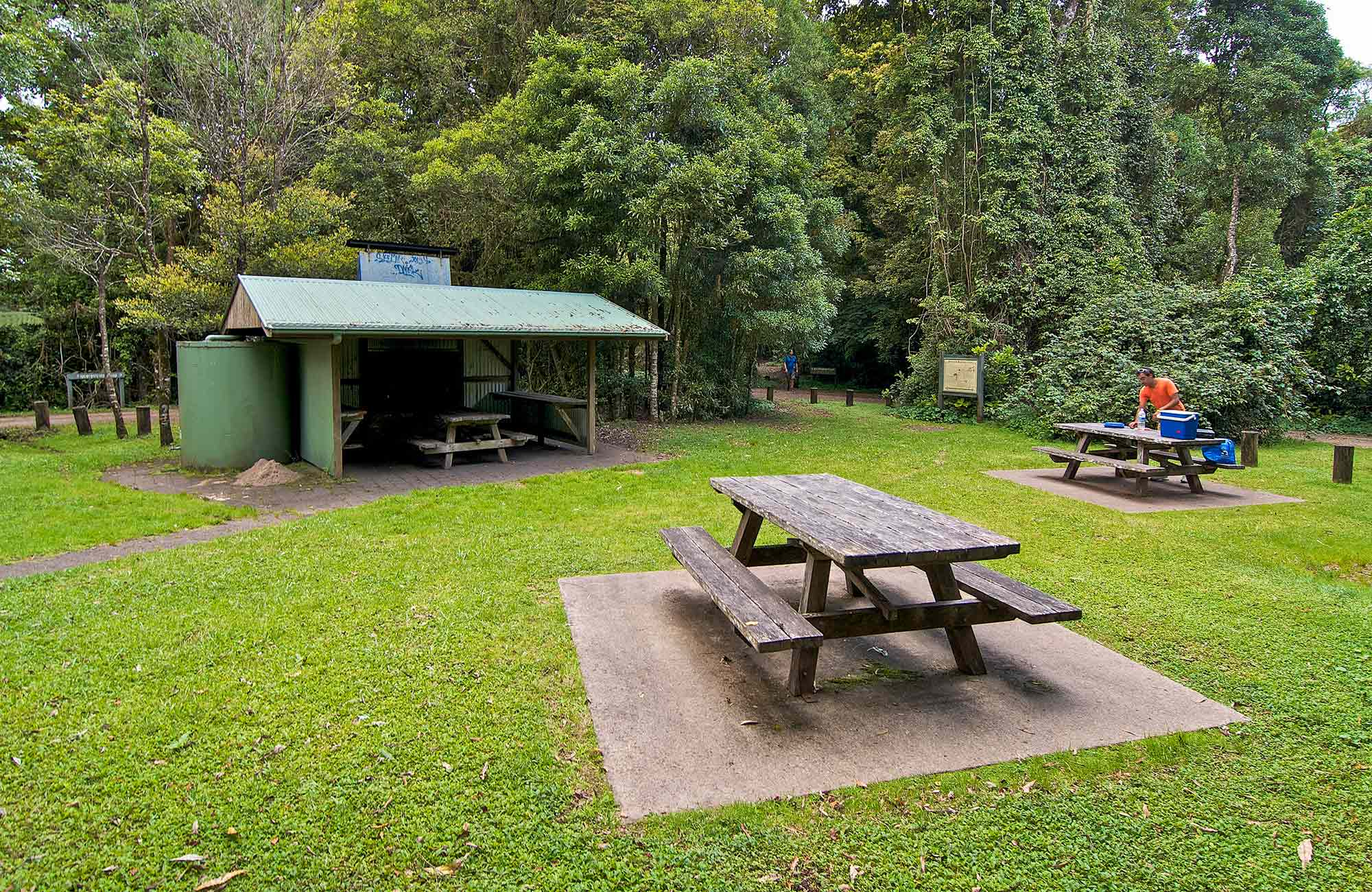 Bar Mountain picnic area, Border Ranges National Park. Photo credit: John Spencer © DPIE