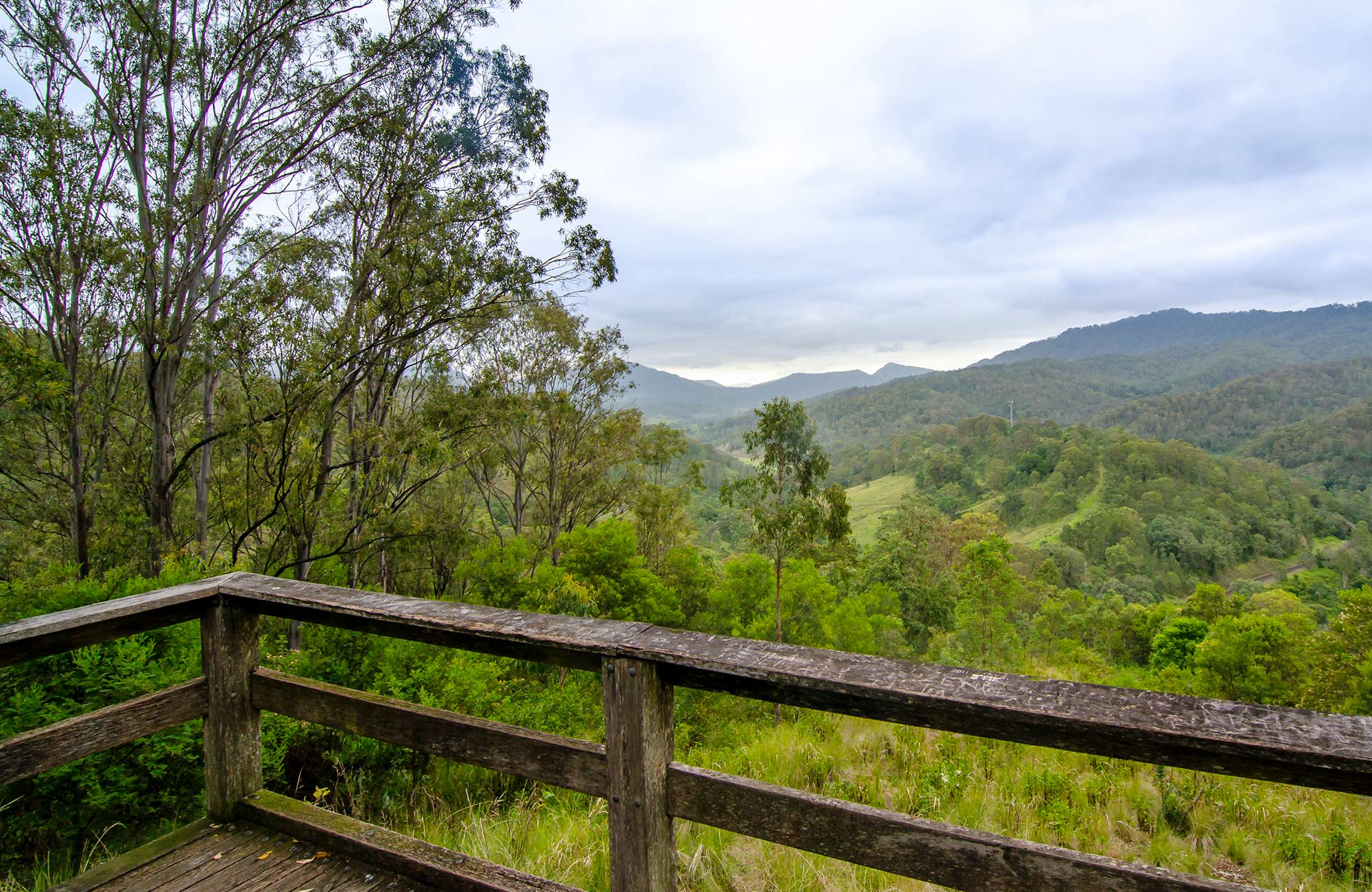 Views of Gradys Creek valley from Border loop lookout in Border Ranges National Park. Photo credit: John Spencer © DPIE