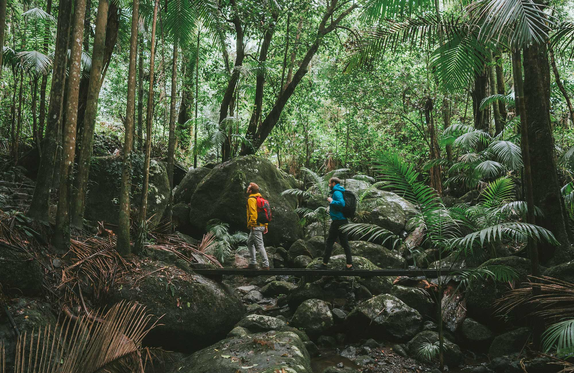 Two men cross a rainforest creek on a walk in Border Ranges National Park. Photo credit: Branden Bodman © Branden Bodman