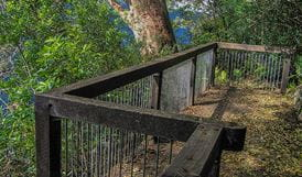 Bar Mountain lookout, Border Ranges National Park. Photo: Stephen King
