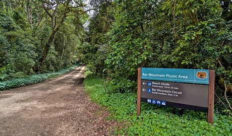 Bar Mountain picnic area, Border Ranges National Park. Photo: John Spencer