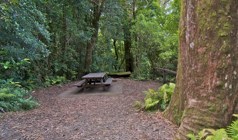 A picnic table surrounded by rainforest at Blackbutt lookout picnic area, Border Ranges National Park. Photo credit: John Spencer © DPIE