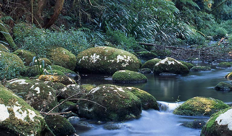 Moss covered rocks in a creek, Border Ranges National Park. Photo credit: Shane Ruming © Shane Ruming