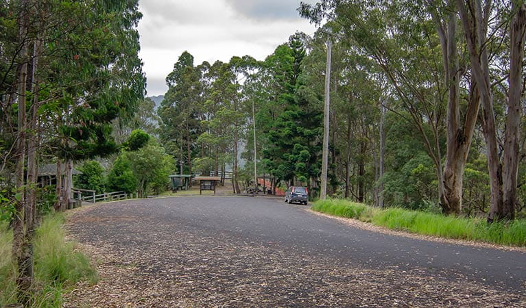 Sealed road and parking at Border Loop lookout and picnic area, Border Ranges National Park. Photo credit: John Spencer © DPIE