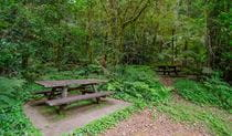 Picn tables at Brindle Creek picnic area, Border Ranges National Park. Photo credit: John Spencer © DPIE
