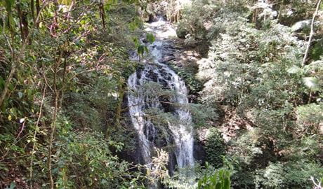 Brushbox Falls lookout, Border Ranges National Park. Photo: Stephen King