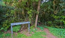 Sign at start of Falcorostrum loop walking track, in Border Ranges National Park. Photo credit: John Spencer © DPIE