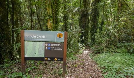 Sign at the start of Helmholtzia loop walking track, Border Ranges National Park. Photo credit: John Spencer © DPIE
