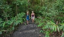 Women bushwalking along Palm Forest walking track in Border Ranges National Park. Photo credit: John Spencer © DPIE
