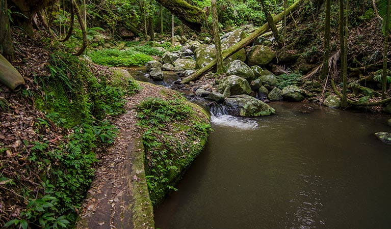 A narrow, creekside path on Palm Forest walking track, Border Ranges National Park. Photo credit: John Spencer © DPIE