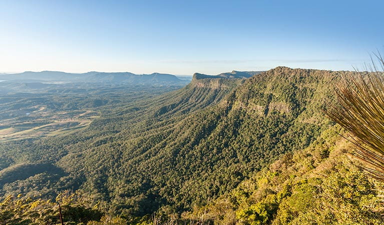 Escarpment views from Pinnacle lookout in Border Ranges National Park. Photo credit: Murray Vanderveer © DPIE