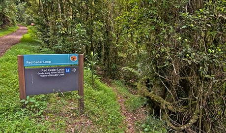 Sign at start of Red Cedar loop, Border Ranges National Park. Photo credit: John Spencer © DPIE