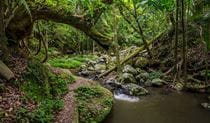 Rainforest creek on Rosewood loop in Border Ranges National Park. Photo credit: John Spencer © DPIE