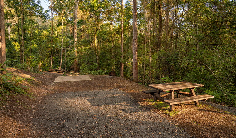 Dedicated campervan and camping spots at Sheepstation Creek campground, Border Ranges National Park. Photo: DPIE/ John Spencer
